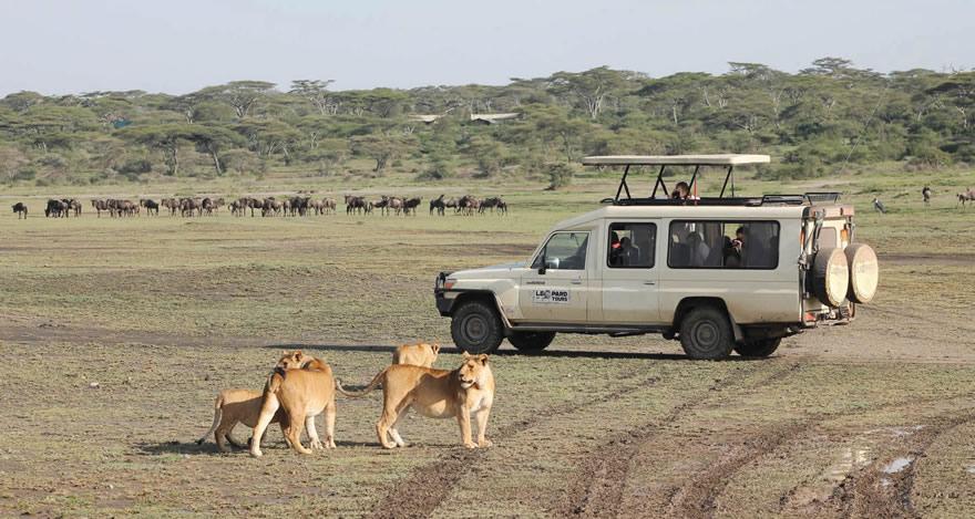 Leopard Tours Tanzania Great People For Memorable Safaris