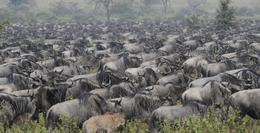 Ngorongoro Conservation Area (1)