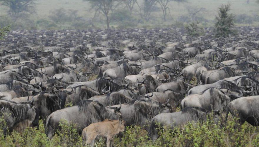 Ngorongoro Conservation Area (1)