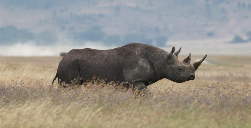 Ngorongoro Conservation Area (3)