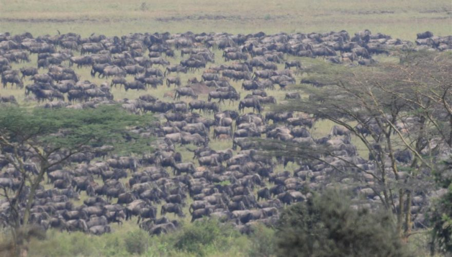 Serengeti National Park (5)