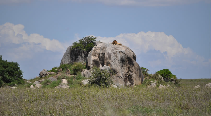 serengeti_national_park3