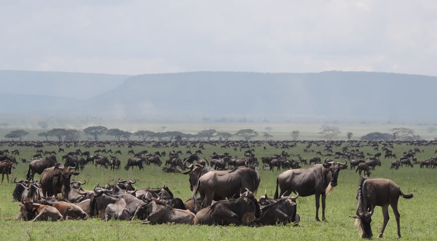 serengeti_national_park4