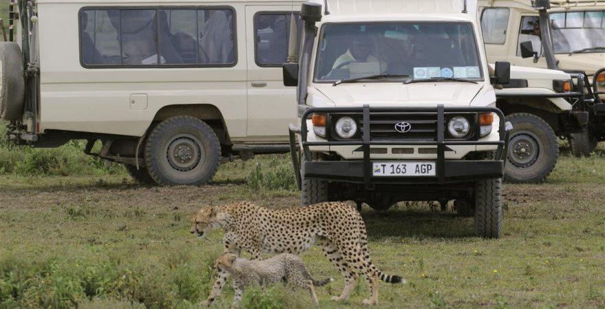 serengeti leopard2
