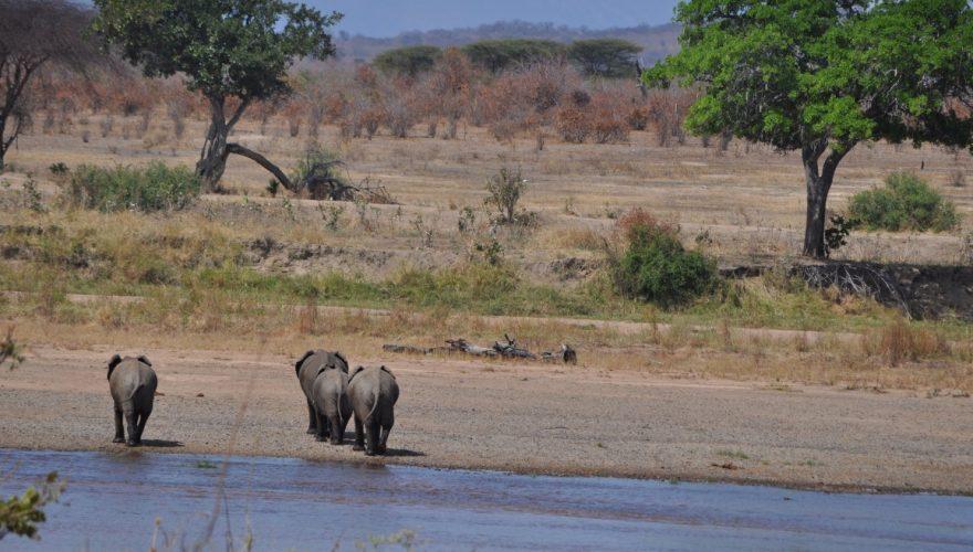 Ruaha National Park (4)