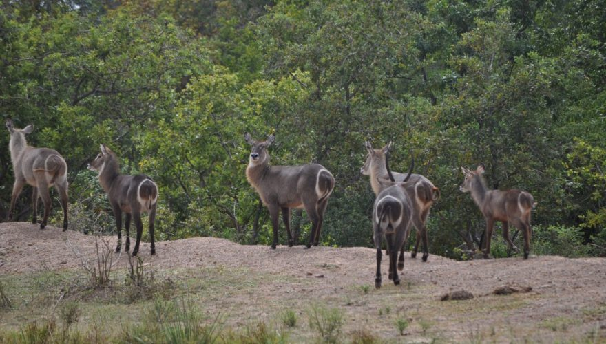 Selous Game Reserve (11)