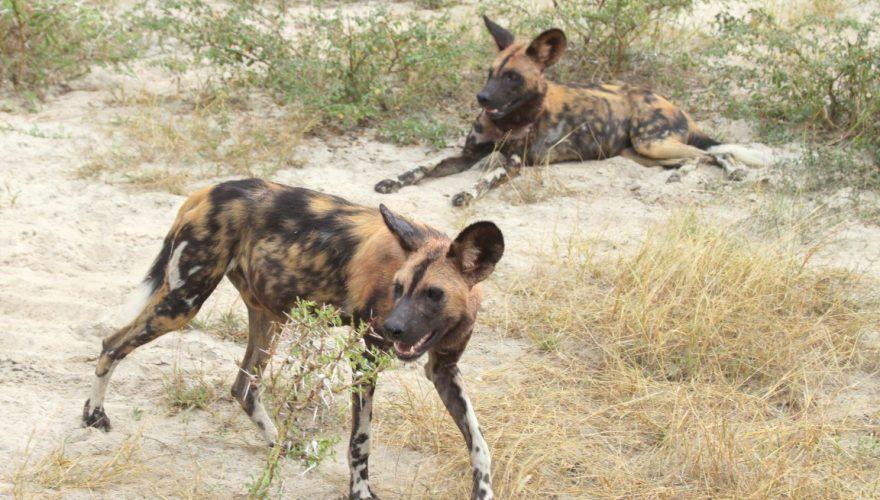 Selous Game Reserve (2)