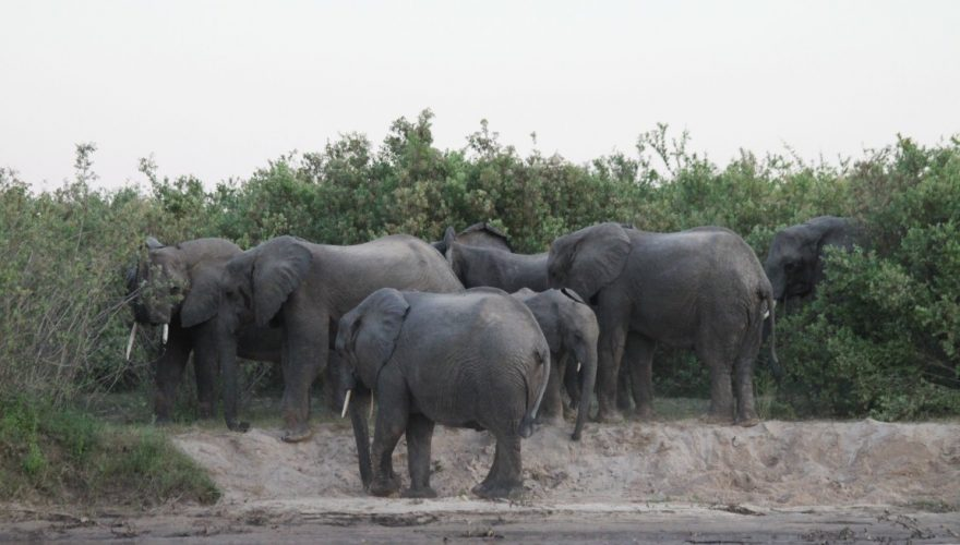 Selous Game Reserve (7)