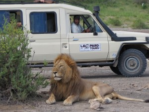 Safari Vehicle land cruiser (3)