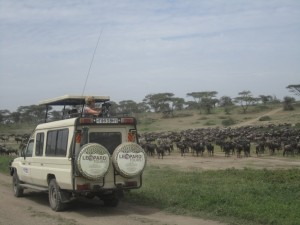 Safari Vehicle land cruiser (4)
