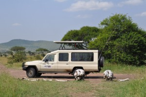 Safari Vehicles (5)