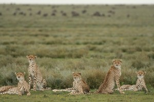 Wildlife Photos Tanzania (14)