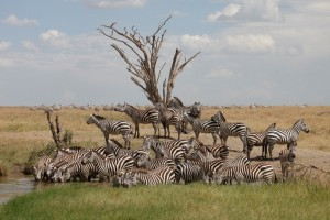 Wildlife Photos Tanzania (36)