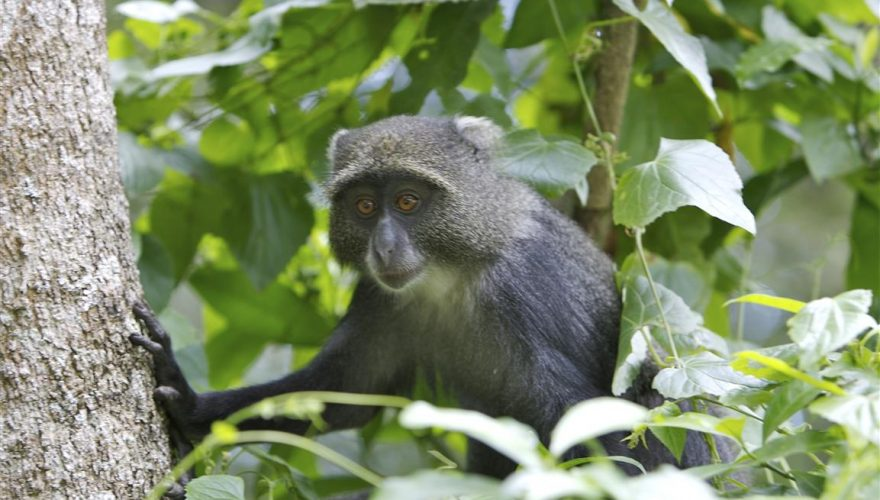 arusha national park (3)
