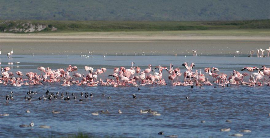 Lake Manyara (1)