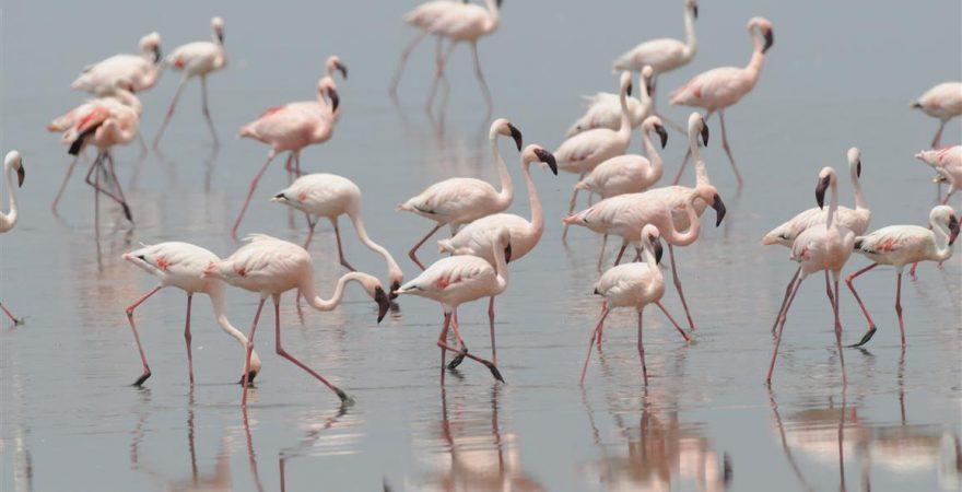 Lake Manyara (4)