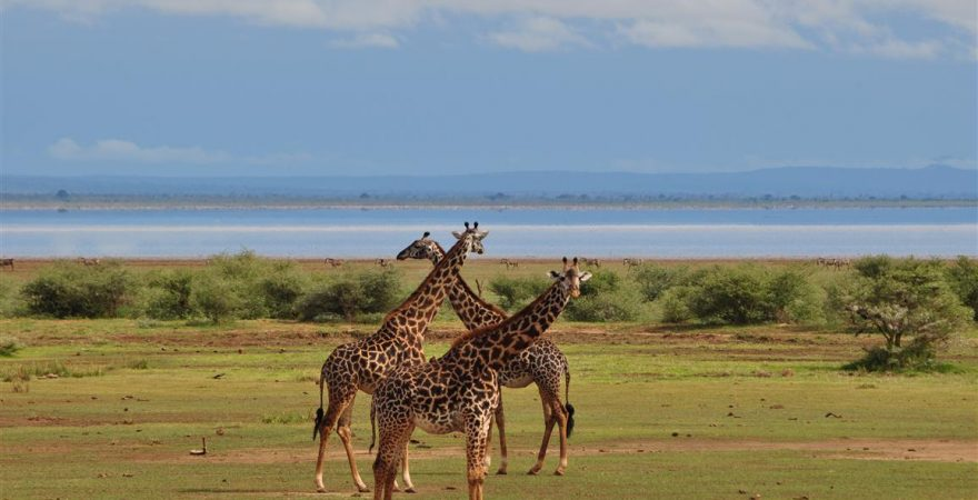 manyara national park (5)