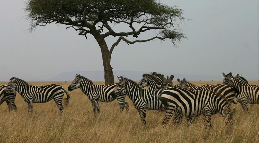 serengeti_national_park