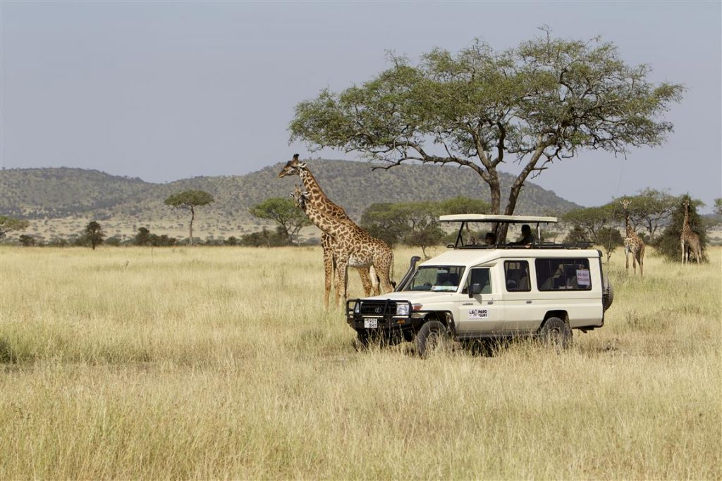 Leopard Tours Tanzania
