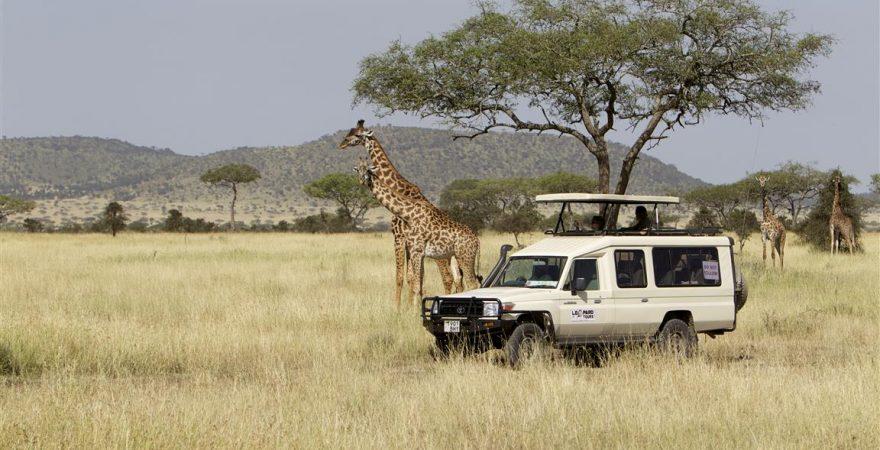 serengeti leopard1