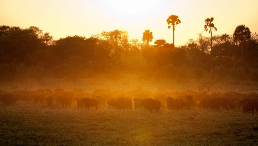 Katavi National Park (1)