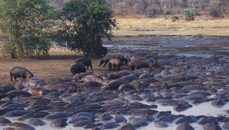 Katavi National Park (2)