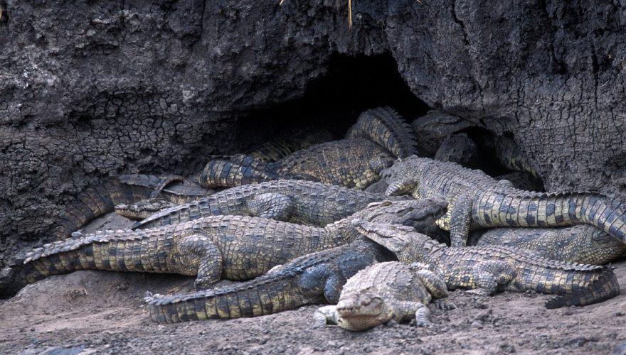 Katavi National Park (3)