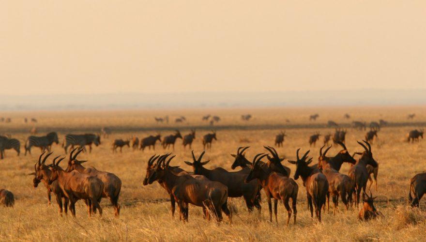 Katavi National Park (4)