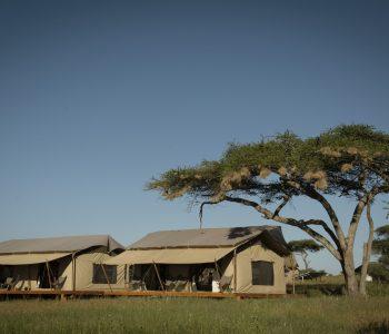 Siringit Serengeti Camp (33) Large