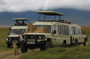 Safari Vehicle land cruiser (1)