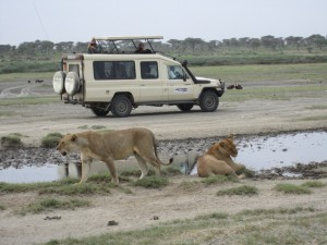 Safari Vehicle land cruiser (5)