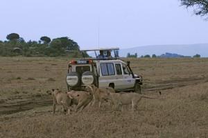 Wildlife Photos Tanzania (1)