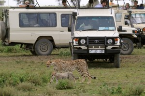Wildlife Photos Tanzania (18)