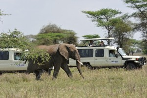 Wildlife Photos Tanzania (21)
