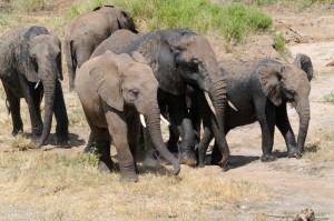 Wildlife Photos Tanzania (24)