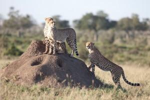 Wildlife Photos Tanzania (3)