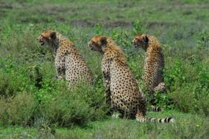Wildlife Photos Tanzania (5)
