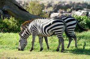 Wildlife Photos Tanzania (6)