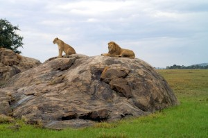 Wildlife Photos Tanzania (9)